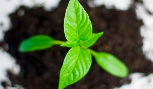 Garden Services Centurion Super Green